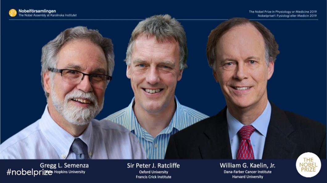 翻攝/Nobel Prize YouTube頻道 解開細胞如何運用氧氣之謎 3學者獲諾貝爾醫學獎