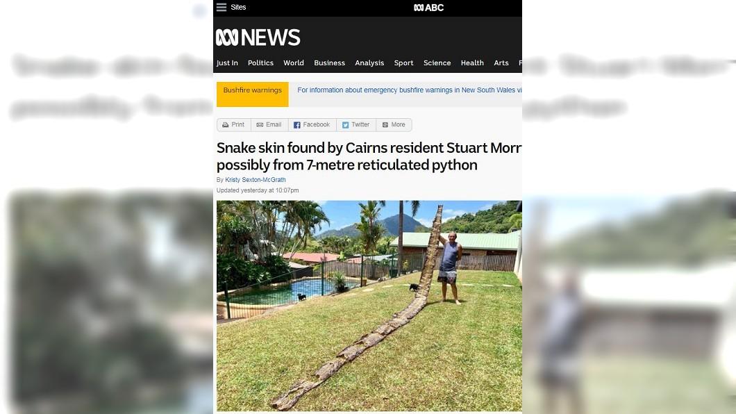 圖/翻攝自澳大利亞廣播公司 男驚見8公尺巨蟒皮! 殘忍真相惹人鼻酸