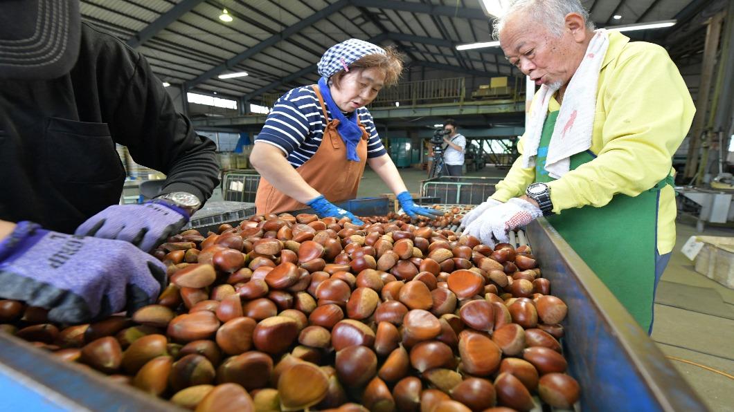 圖/達志影像美聯社 極端天氣壞日本秋味 栗子驟減.紅葉凋零