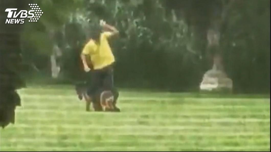 「把狗吊起來」 知名警犬訓練所遭控虐待