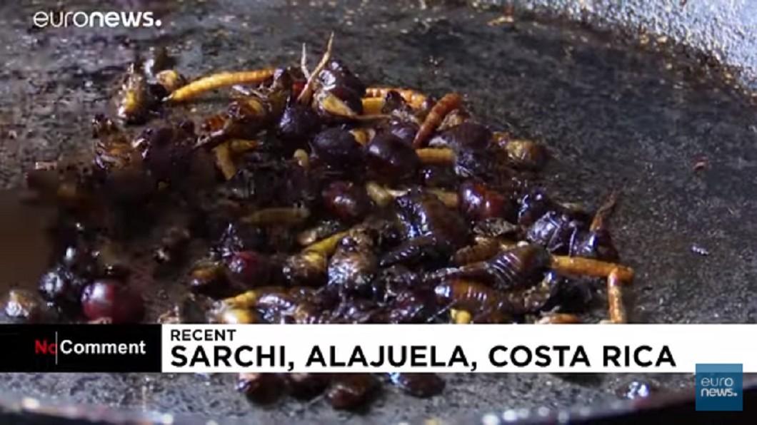 圖/翻攝自EURONEWS YouTube頻道 蟑螂吃起來!專家動員全家:吃起來像洋芋片