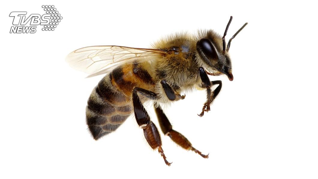示意圖/TVBS 女遭大群蜜蜂狂叮病危 驚恐回想:像頂帽子蓋在腦上