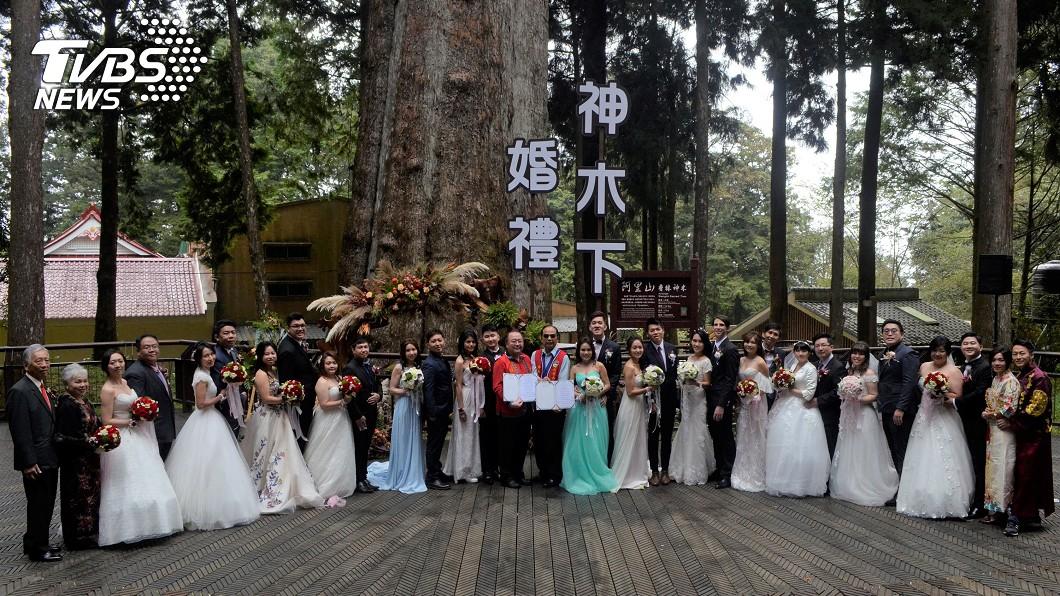 圖/中央社 阿里山神木下婚禮 結縭43年夫妻圓蜜月夢
