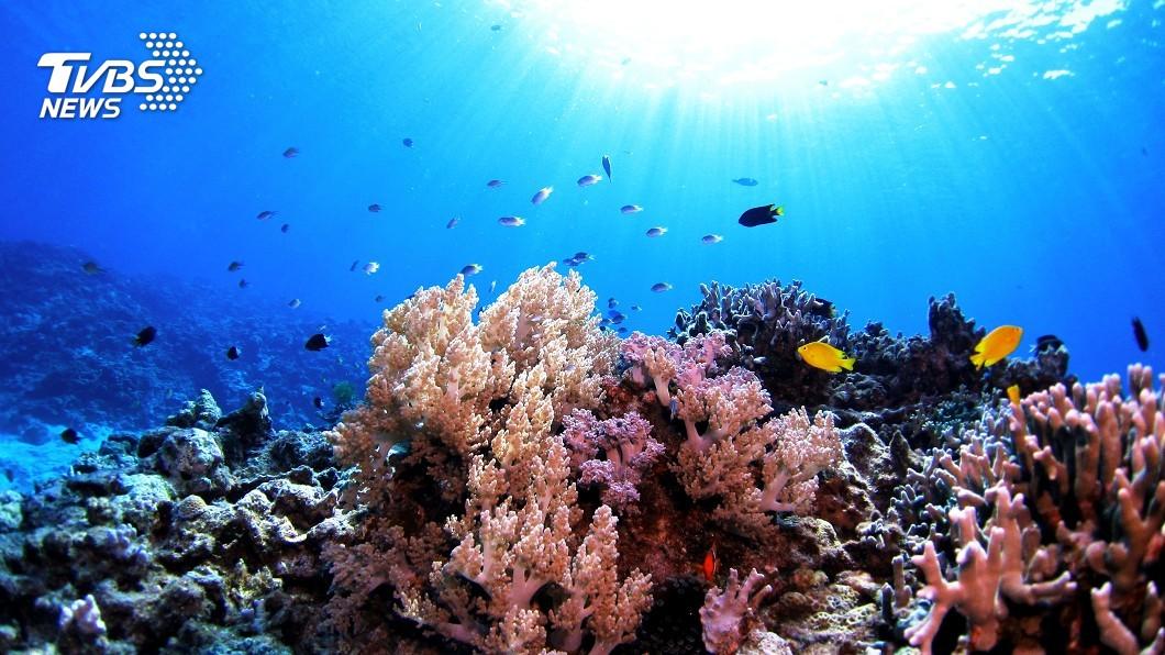 示意圖/TVBS 日本颱風增多證據? 外海珊瑚分布漸北移