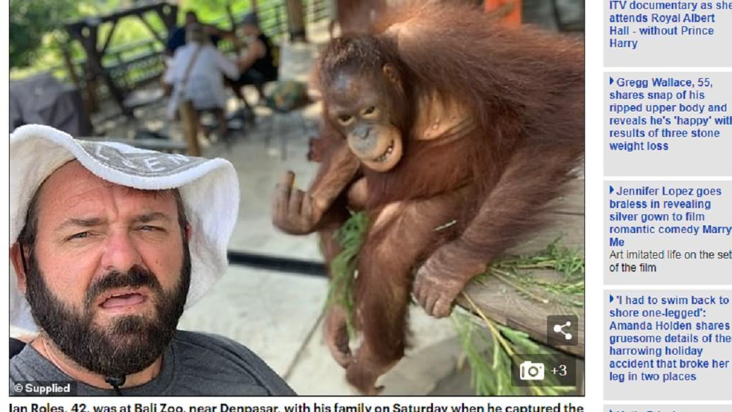 圖/翻攝自 每日郵報 自拍不給食物? 猩猩見「奧客」怒比中指