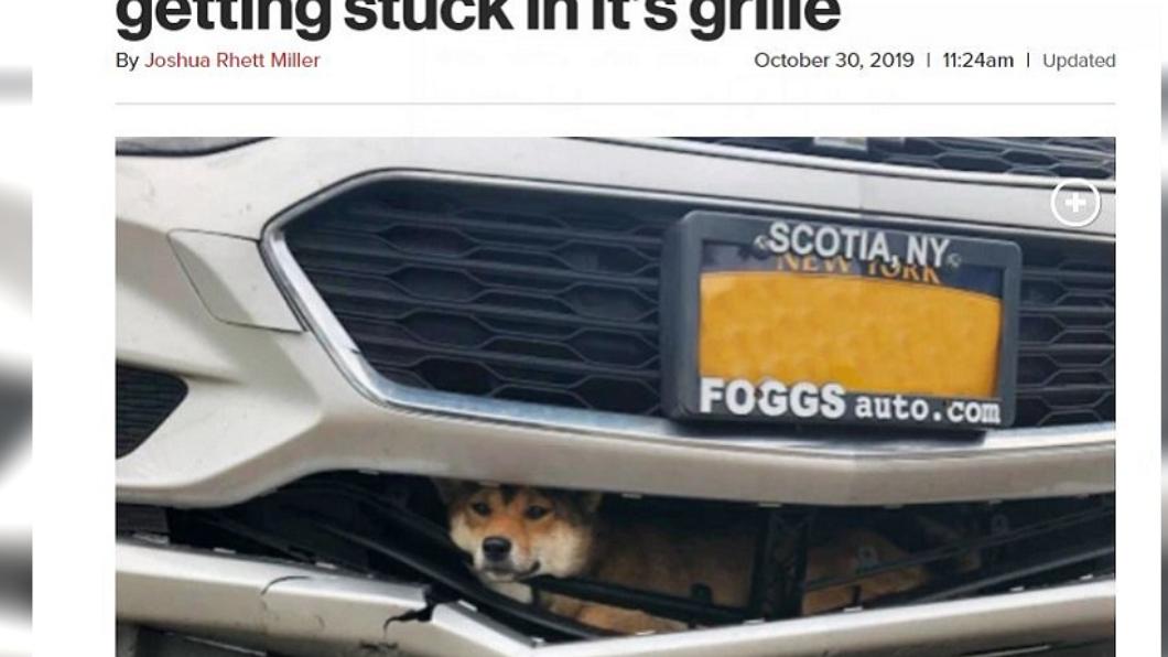 翻攝/New York Post 狗狗被撞「卡進保險桿」 天兵女開了45分鐘才發現