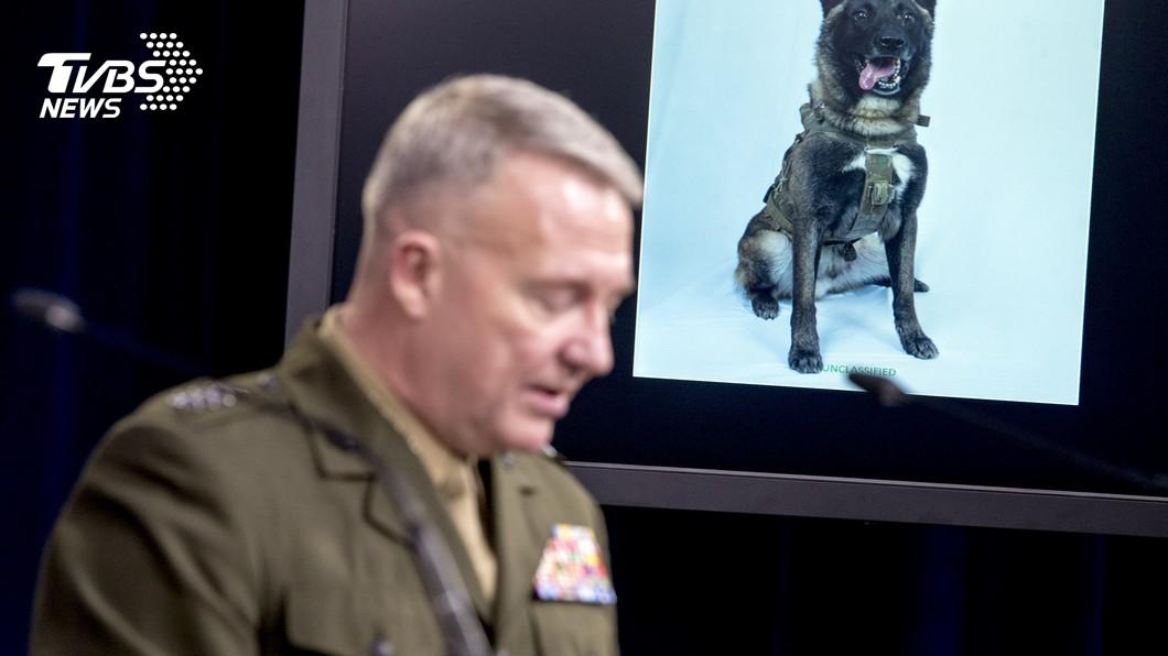 圖/達志影像美聯社 追捕ISIS立大功 超人氣軍犬「柯南」網友搞笑修圖