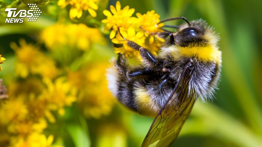 示意圖/TVBS 烏龍一場!蜜蜂飛進教室學生狂尖叫 法警接獲恐攻警報