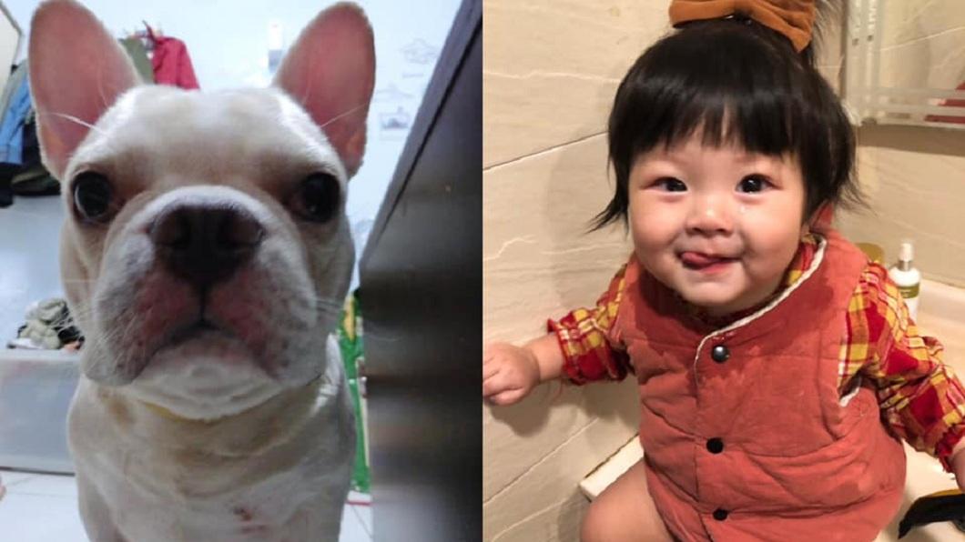1名男網友分享自己愛犬和小女兒之間的故事。(圖/網友Ed Wu授權提供) 愛犬亡後妻才懷2胎!長女指孕肚說「這句」 夫妻淚崩