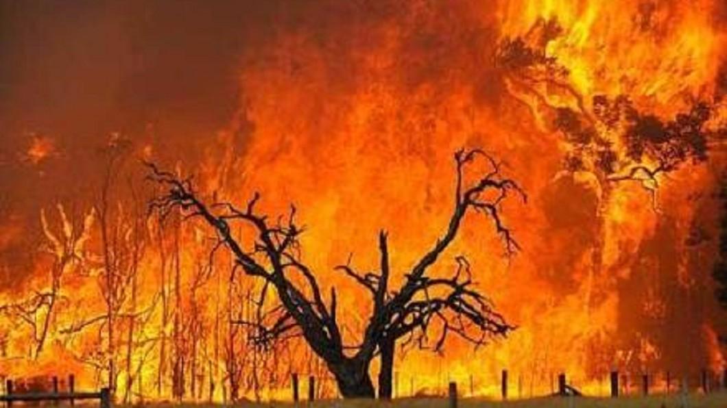 圖/翻攝自北京大司马微博 極端氣候發威!森林大火不停 關注時事學單字