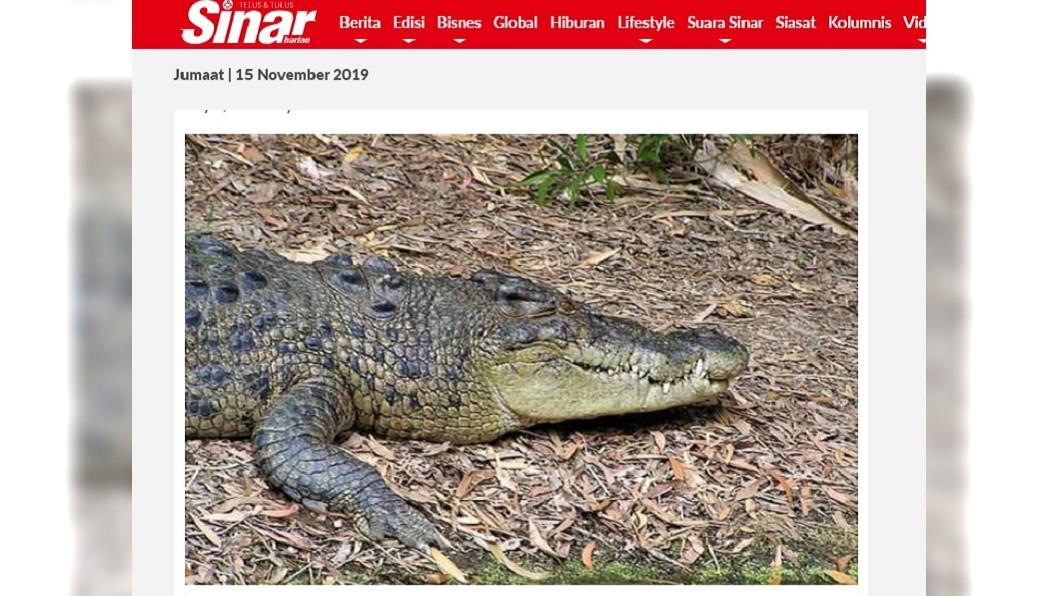 圖/翻攝自 Sinar Harian 過河險被鱷魚咬腿拖下水 英勇哥哥砸石救妹妹