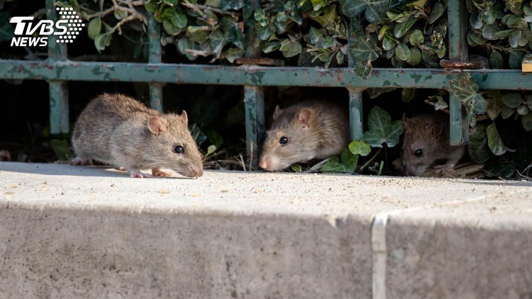示意圖/TVBS 嚴防鼠疫擴散 中國官方制定出蒙進京防火牆