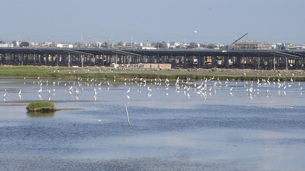 圖/韋能能源提供 全台最大鹽田光電場生態共榮 黑面琵鷺也來報到