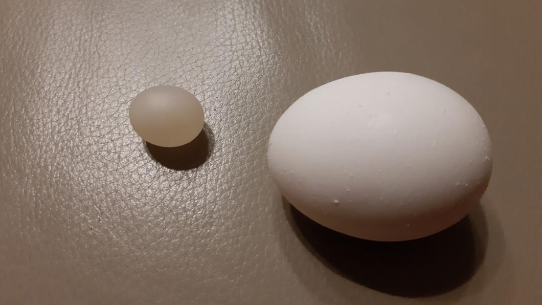 翻攝自/爆料公社 這啥?打蛋發現「迷你物」藏其中 專業網友:幸運