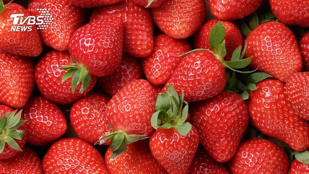 示意圖/TVBS 法西颱風淹沒溫室 日本入冬草莓單週連三漲