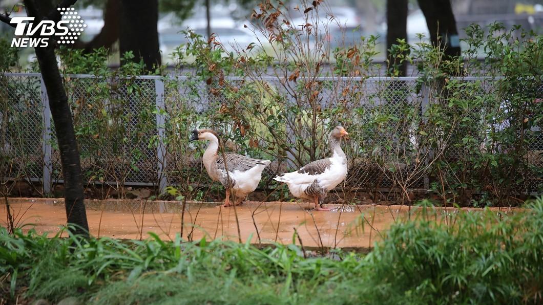 圖/中央社 台灣原址最老新竹動物園再生 拆獸籠打造類棲地