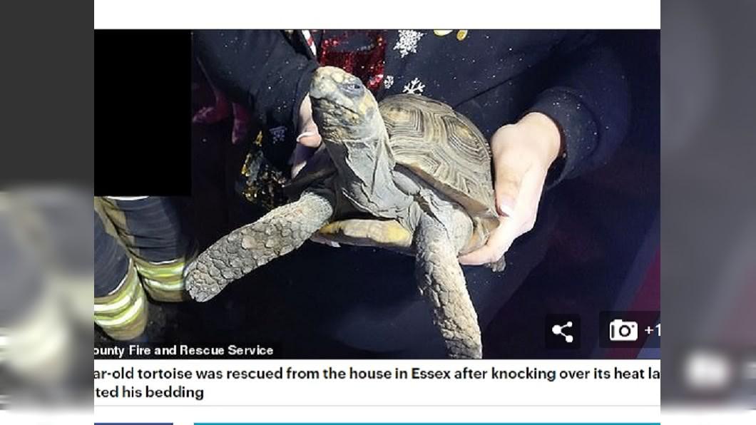 厭世的烏龜打翻加熱燈,引起火災 (圖/翻攝自Daily Mail) 耶誕節房子燃燒起火 凶手是「厭世臉」陸龜