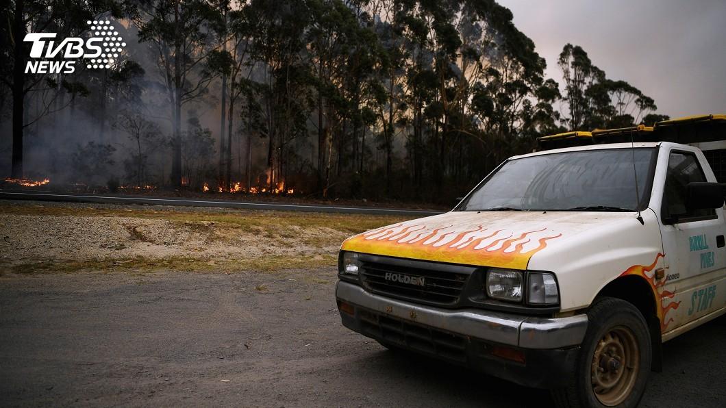 圖/路透社 澳野火燒掉一個南韓 受傷無尾熊救不完