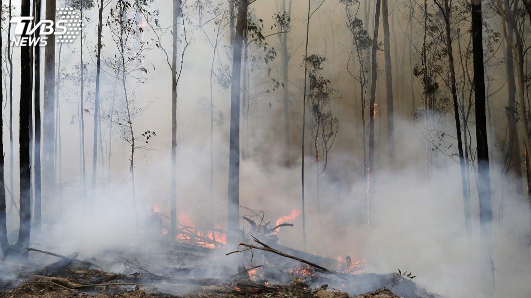 圖/達志影像美聯社 森林野火燒掉民心聲望 澳洲總理支持度暴跌