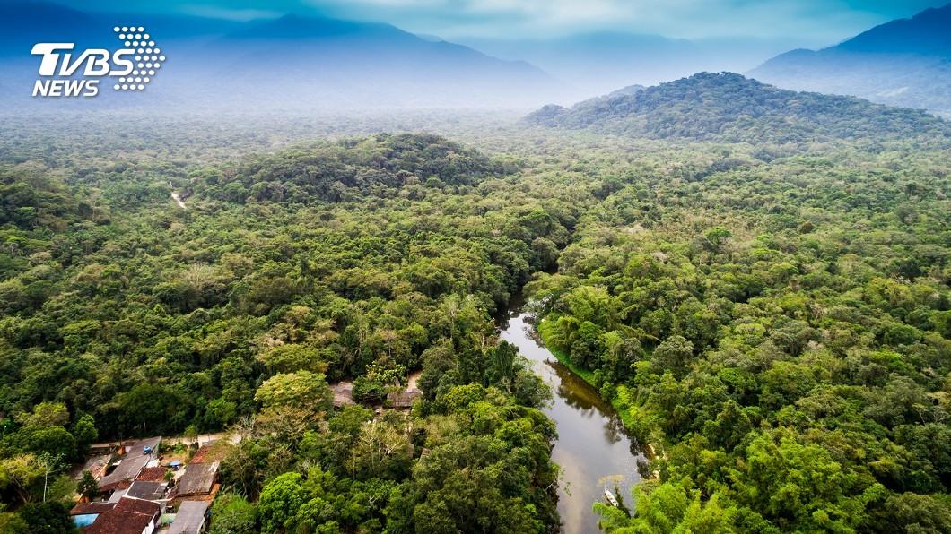 全球森林ID計畫 為珍貴樹種建檔打擊盜木
