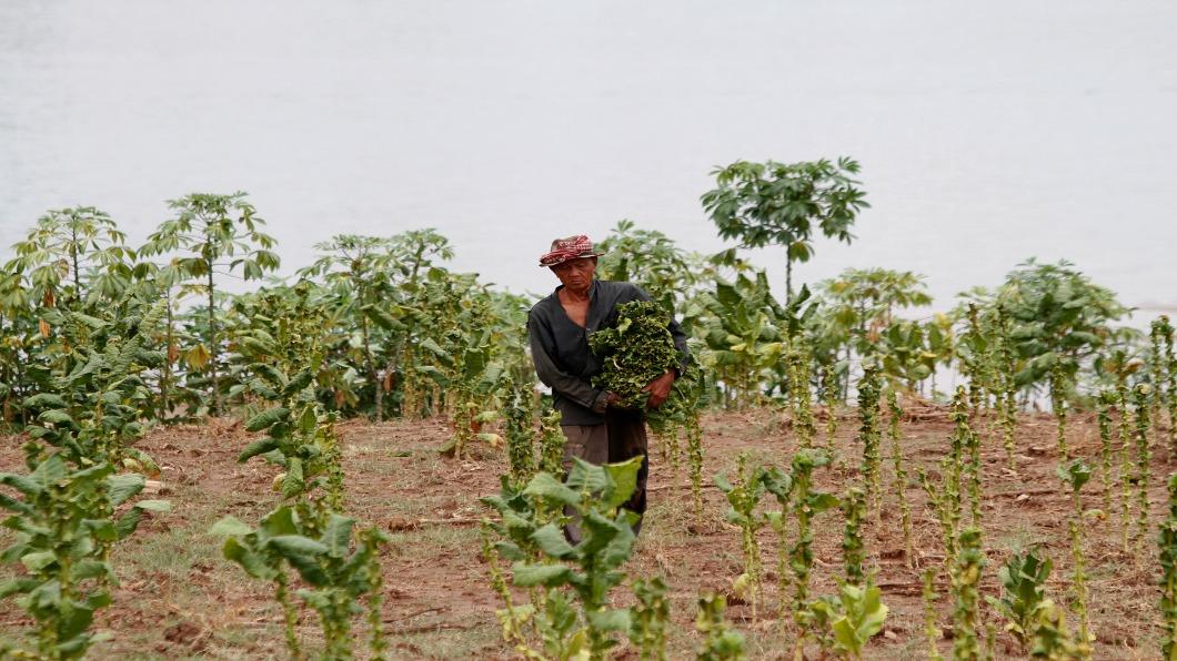 圖/達志影像路透 東協經濟體起飛 日本.寮國合作農產品拚外銷
