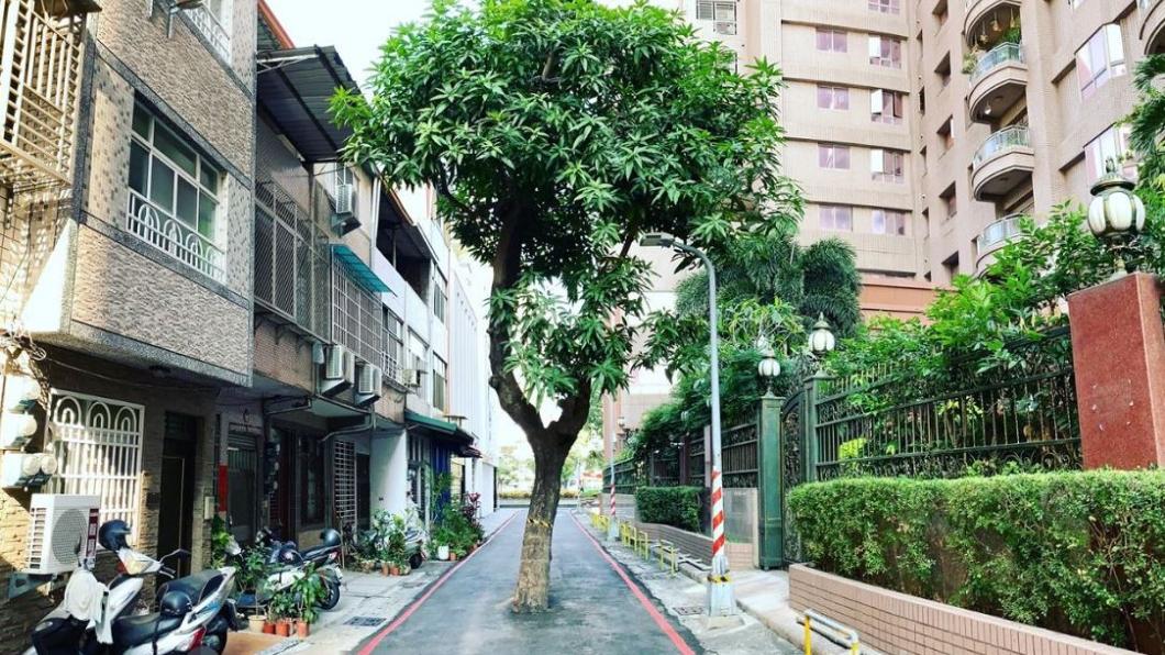 (圖/翻攝自臉書粉絲專頁「高雄點Kaohsiung.」) 最狂路霸!「路中樹」成街道奇景 移除價格竟破千萬