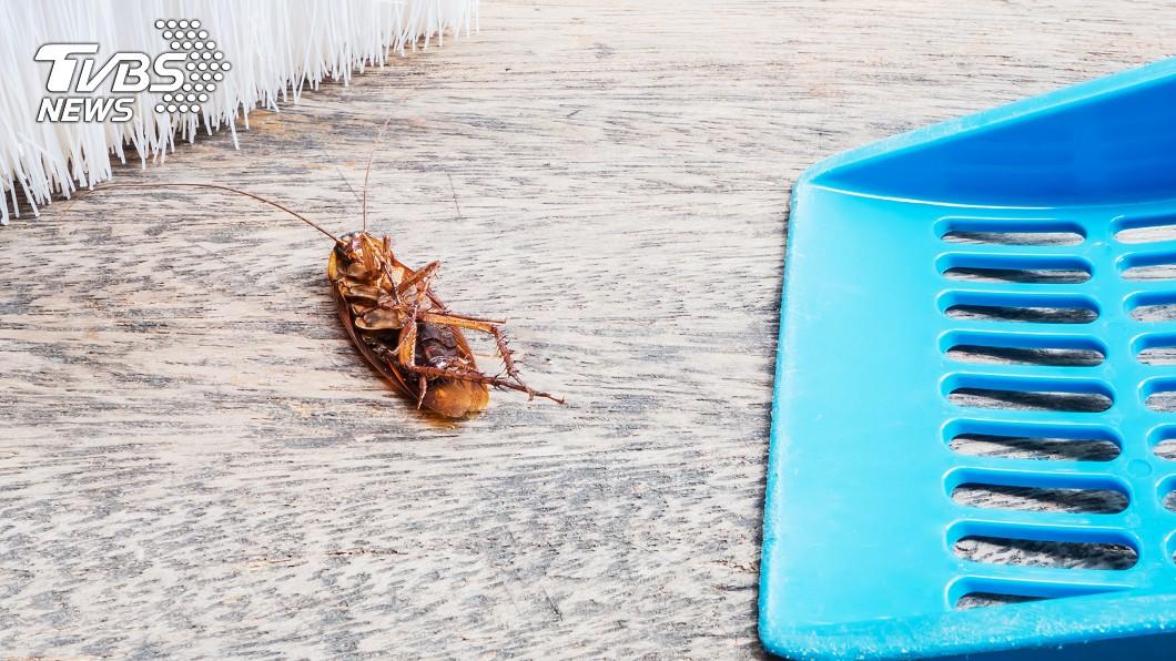 (示意圖/TVBS) 房間2年沒蟑螂終破功 多人點出「1設施」是關鍵