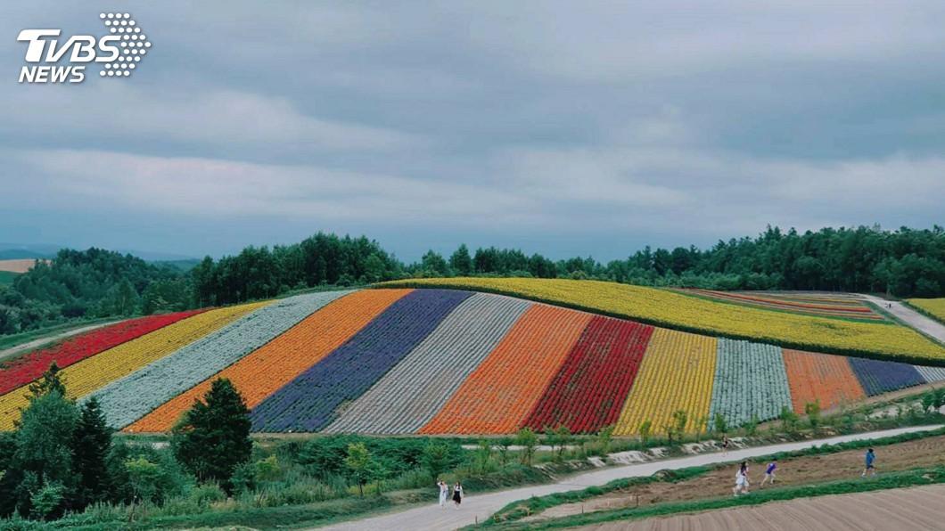 圖為北海道四季彩之丘。圖/中央社 自由行漸成市場主流 「組裝式旅遊」掀產業變革