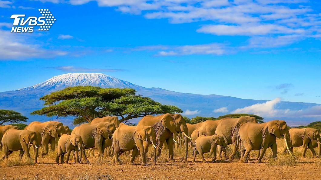 示意圖/TVBS 肯亞動物大遷徙 吸引生態攝影家遠征非洲拍攝