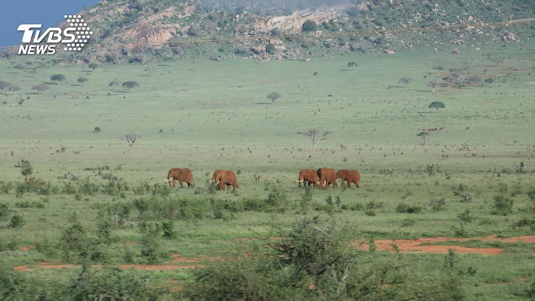圖/路透社 犀牛大象遭盜獵 肯亞保育區收容瀕絕動物