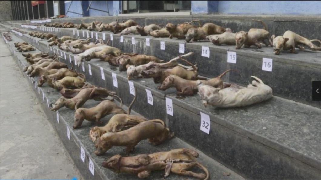 廣西警方查獲有女子到處兜售野味,家中竟冷藏超過300隻野生動物。(圖/翻攝自騰訊網) 就是要吃?廣西查獲300隻「冷凍野味」 專賣老主顧