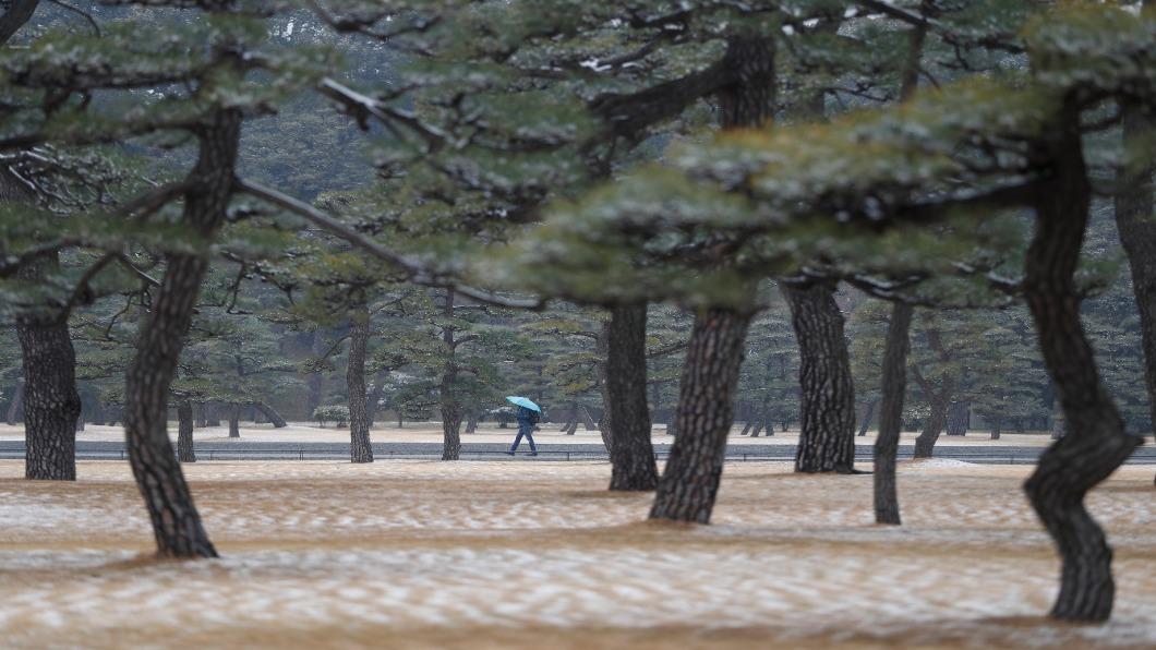 圖/達志影像路透 日本暖冬打亂農漁產 鼠輩橫行蟲蟎為害
