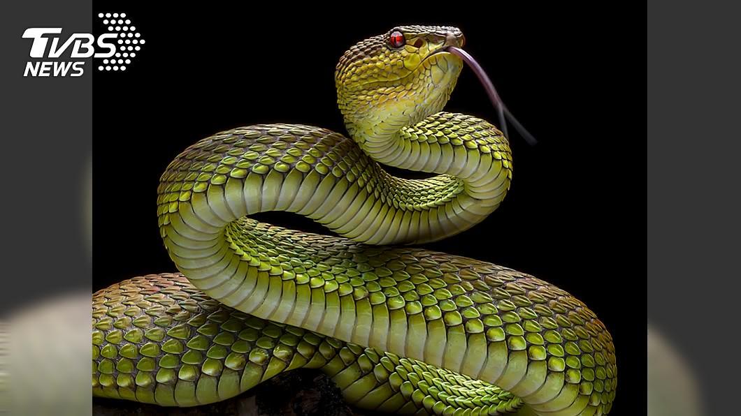 懷疑寄生蟲是李男20年前生吃蛇膽時,一起被吃進人體的。 (示意圖/TVBS) 生吃野味惹禍!男腦中抓出11公分絛蟲 存活體內20年