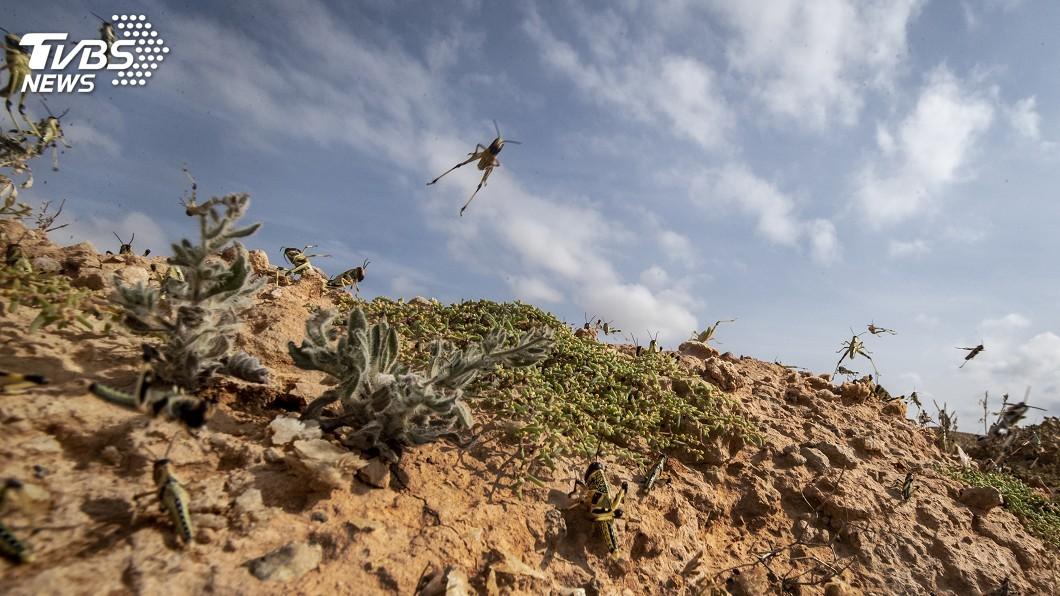 東非陷糧食危機!氣候變遷加人禍 醞釀超完美蝗災