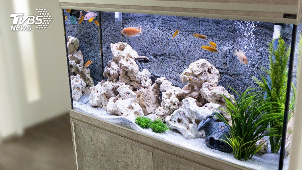 許多民眾會在家中擺設水族箱裝飾。(示意圖/TVBS) 毒液可讓10人死!全球最毒螺藏匿水族箱 徒手抓牠穩掛