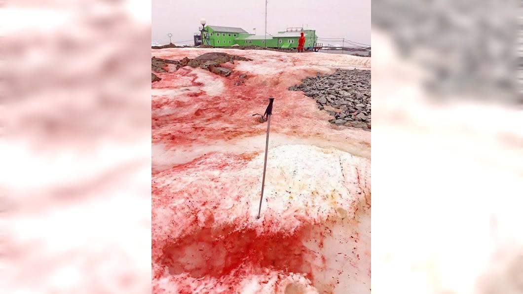 圖/翻攝自臉書Національний антарктичний науковий центр 驚悚!南極雪地一片血紅 背後原因令人擔憂