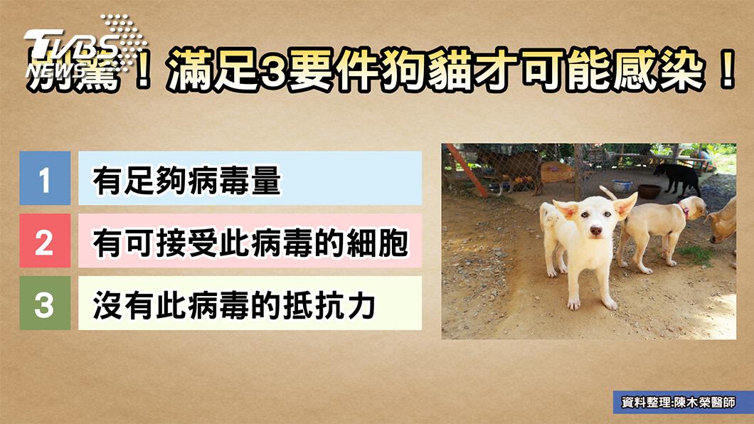 圖/TVBS提供 毛孩傳染新冠肺炎? 醫曝:滿足這三要件才有可能