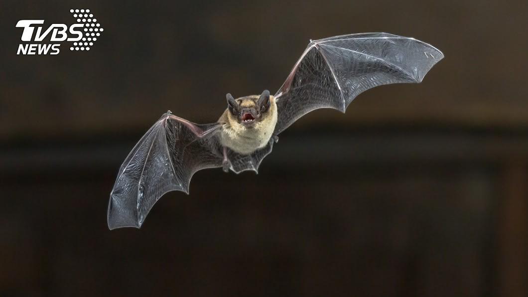 示意圖/TVBS 美官員傳兩年前就示警 武漢蝙蝠研究恐致流行病