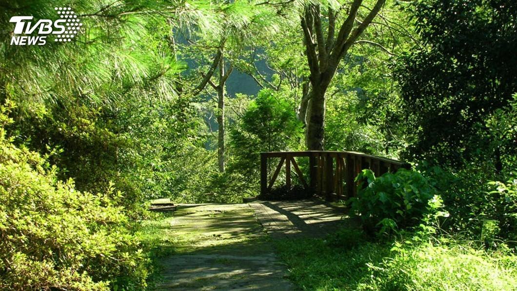 兒童節連假 國家森林遊樂區12歲以下免費入園