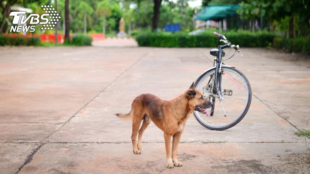 每個人身邊多多少少會有怕狗的朋友。(示意圖/TVBS) 騎腳踏車被狗猛追怎麼辦? 過來人授妙招秒解