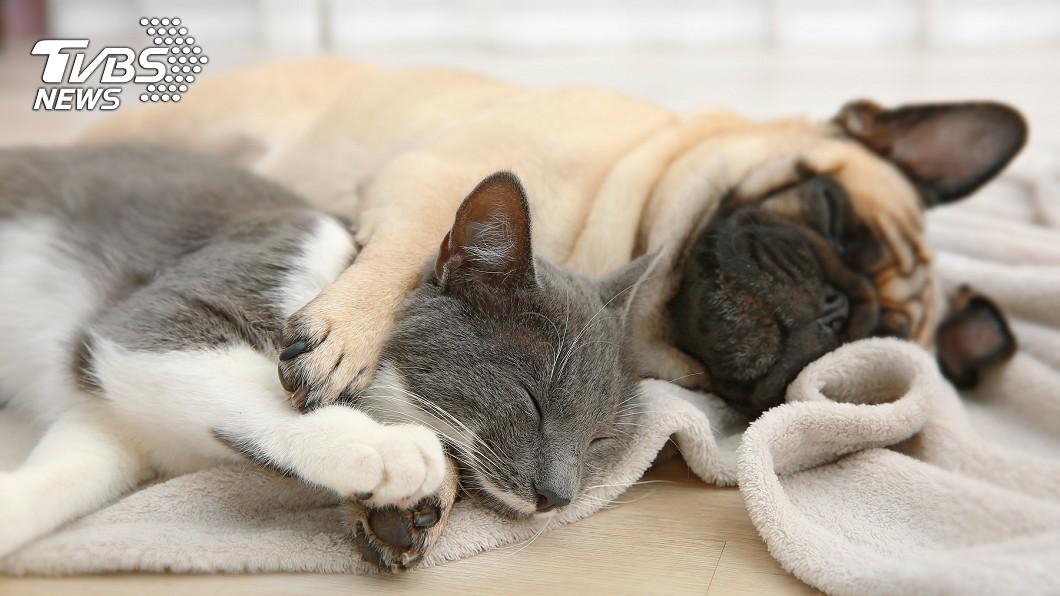 貓狗是許多人的好朋友。(示意圖/TVBS) 深圳5月起「禁吃貓狗」 陸網友怒:不該管的瞎管