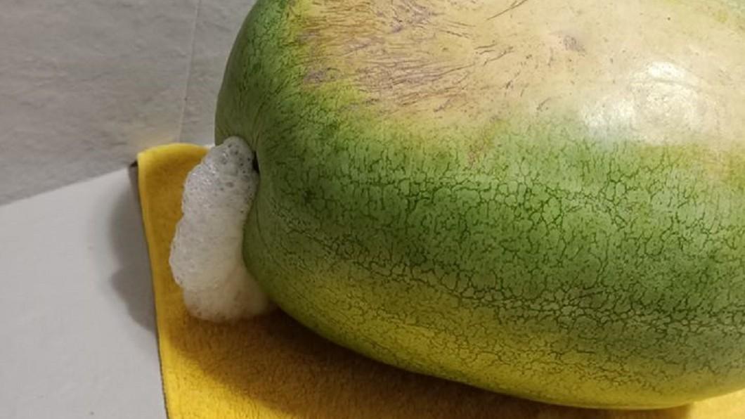 一名網友在賣場買到「口吐白沫」的西瓜。(圖/翻攝自臉書社團「Costco好市多 商品經驗老實說」) 西瓜才買1晚竟「口吐白沫」!網一看驚喊:別退,會爆炸
