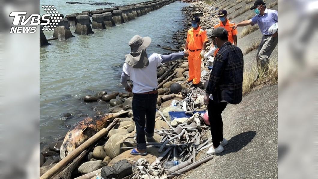 圖/中央社 嘉義東石通報小虎鯨死亡 5月起擱淺死共8隻