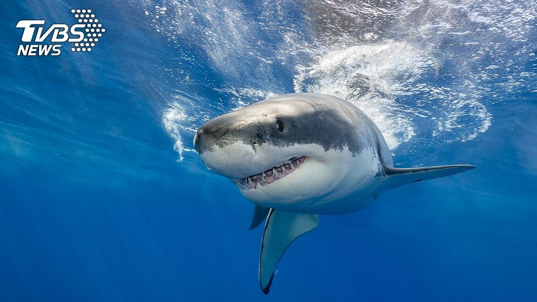 示意圖/TVBS 鯊魚攻擊! 衝浪客情急「出手揍兩拳」死裡逃生