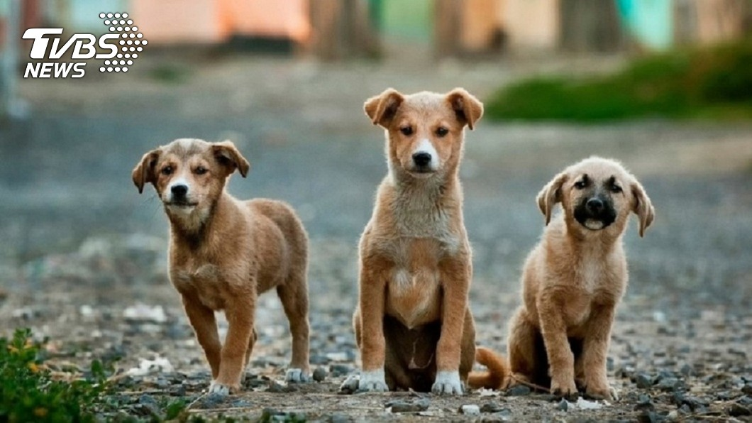 台中1名男子狠心棄養18隻狗狗,導致牠們彼此互咬啃食致死。(TVBS資料示意圖) 棄養18隻狗狗…餓到互啃屍骸一地 狠飼主辯:有餵食