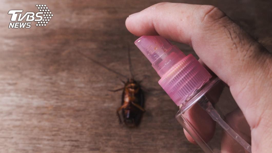 許多人看到蟑螂的第一反應就是要消滅牠。(TVBS資料示意圖) 帥氣幫同事滅小強 他「一腳」付出代價網笑:好貴的蟑螂
