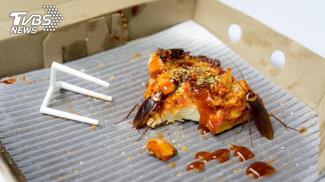 蟑螂是許多人的天敵。(示意圖/TVBS) 吃便當含進「整隻蟑螂」 他崩潰揭爆漿口感