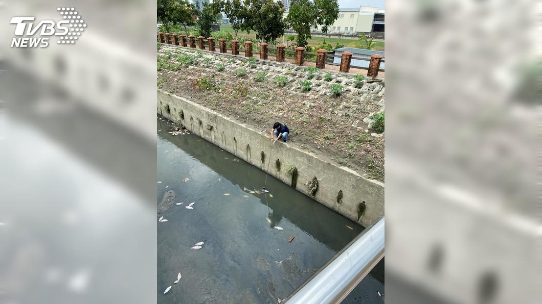 圖/高市環保局提供 鳳山溪浮現死魚 研判豪大雨夾帶廢棄物造成