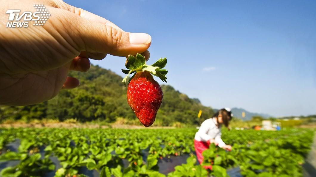 農委會表示,將發行性質與行政院振興三倍券一樣的農業旅遊券。(示意圖/TVBS) 農業振興券敲定250元 5百萬份十大場域通用