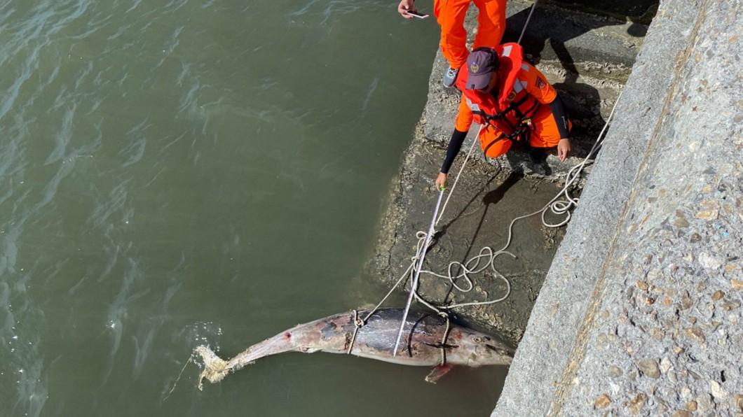 海巡署人員昨天下午在彰化線西河道北側,發現死亡鯨豚。(圖/中央社,翻攝照片) 彰化海巡發現東部常見弗氏海豚屍體 死因待查